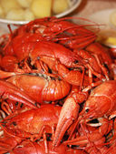 Fresh boiled crawfish — Stock Photo