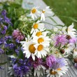 Summer bunch of flowers — Stock Photo