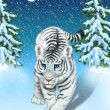 Stockfoto: White tiger