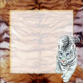Tiger on frame — 图库照片