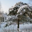 Stockfoto: Winter wood