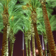 Night view - palm trees — Stock Photo