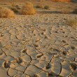 Dry soil - ecology disaster - Stock Photo