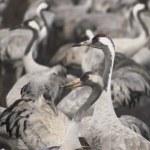 Постер, плакат: Migrate of birds