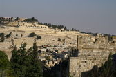 Olive mount in Jerusalem — Stock Photo