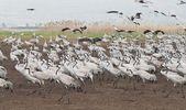 Birds migration — Stock Photo