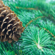 Fir cone and branch - 图库照片