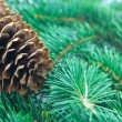 Fir cone and branch - ストック写真