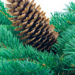 Stock Photo: Fir cone and branch