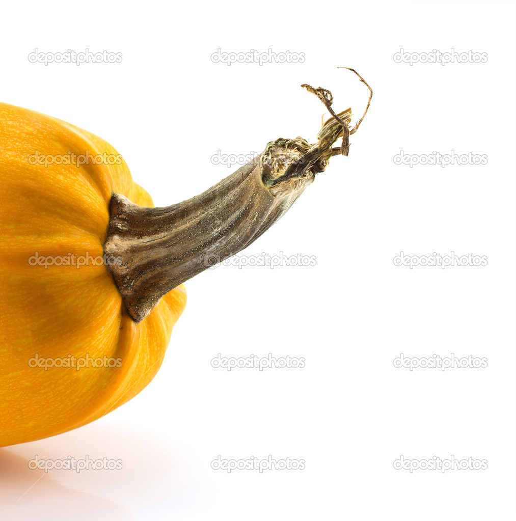 Pumpkin isolated on a white background, crop — Stock Photo #1489070
