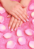 Rose petals and hands — Stockfoto
