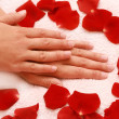 Red petals and hands — Stock Photo