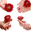Red rose in a female hand — Stock Photo #2567324