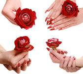 Red rose in a female hand — Stock Photo