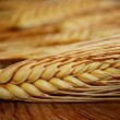 Royalty-Free Stock Photo: Gold Wheat