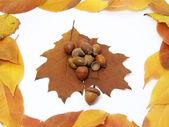 Acorns&leaves — Stock Photo