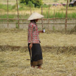 Asian Farmer 1 — Stock Photo