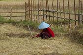 Agricultor asiática 2 — Foto Stock