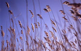 Blowing in the wind — Stock Photo