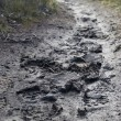 Muddy path — Stock Photo