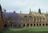 悉尼大学四边形 — 图库照片