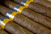 Cigars texture — Stock Photo