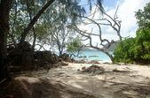 Beach on Seychelles — ストック写真