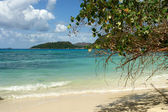 Green Tree hanging over a sandy beach. — Stock Photo