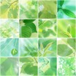 Leaf collage — Stock Photo