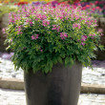Flowerpot — Stock Photo #1296784