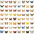 Stock Photo: Butterflies