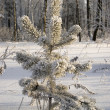 Snowy winter tree. - Stock Photo