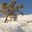 Snowy winter tree. - Stock fotografie