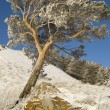 Snowy winter tree. — Stockfoto #1415437