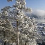 Winter landscape — Stock Photo #1415512