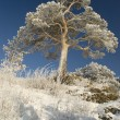 Snowy winter tree. — Stock Photo