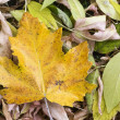 Autumn leafs. — Stock Photo