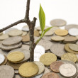 Coins and plant. — Foto de Stock