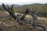 Utracone drzewa. — Zdjęcie stockowe