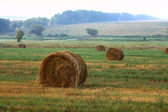 Hay sheaves — Stock Photo
