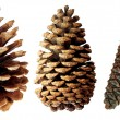Two pine cones — Stock Photo #1272288
