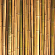 Reeds — Stock Photo #1274356