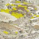Lichens over bark 2 — Stock Photo #1274559