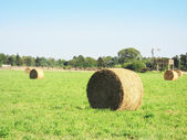 Round Bales — Stock Photo