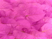 Pink leaves — Stock Photo