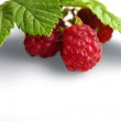 Royalty-Free Stock Photo: Raspberry with stem and leaves