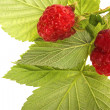 Raspberry with stem and leaves — Stock Photo