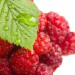 Raspberry — Stock Photo #1303003