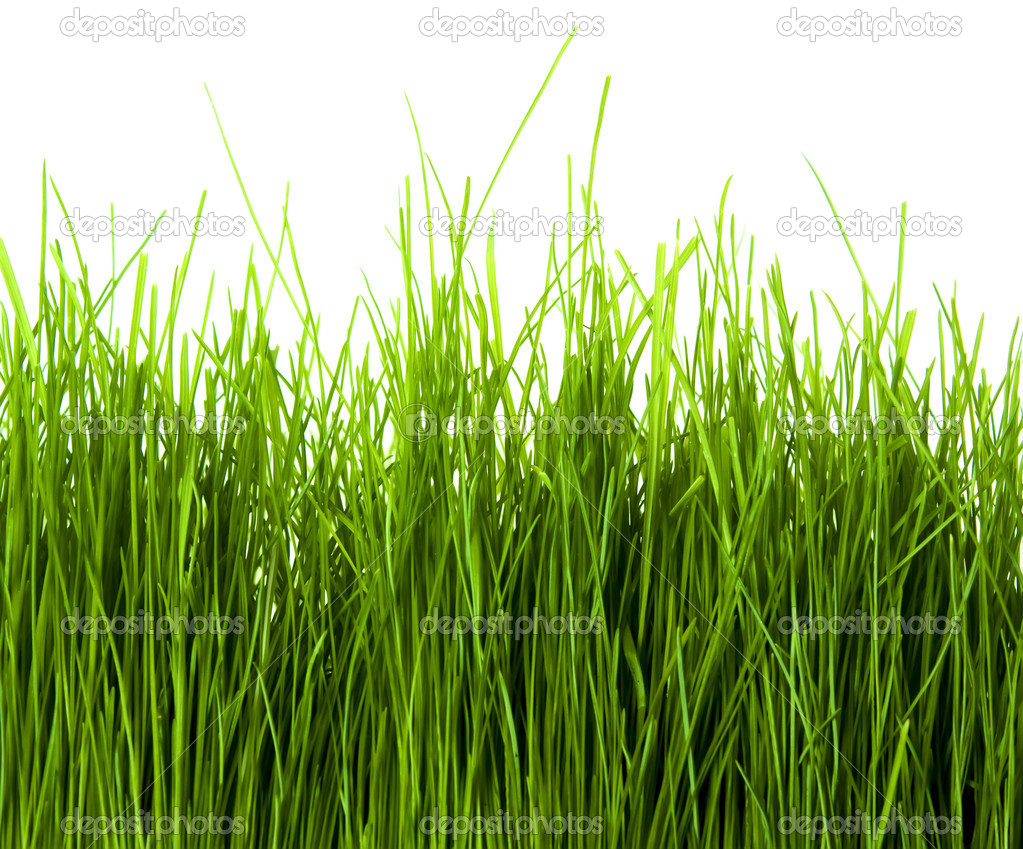 Green Grass isolated on white background — Stock Photo #1306486