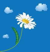 Ox-eye daisy — Stock Vector